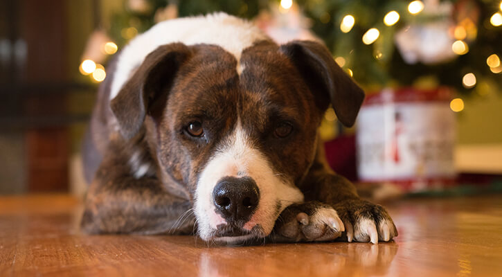 Keeping Pets Safe During the Winter Holidays